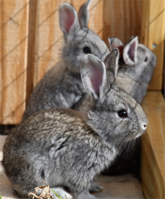 Light grey babies